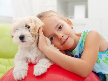 emf protection for your pet
